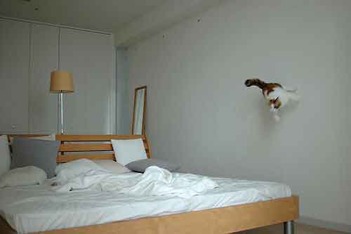 jumpingcats01