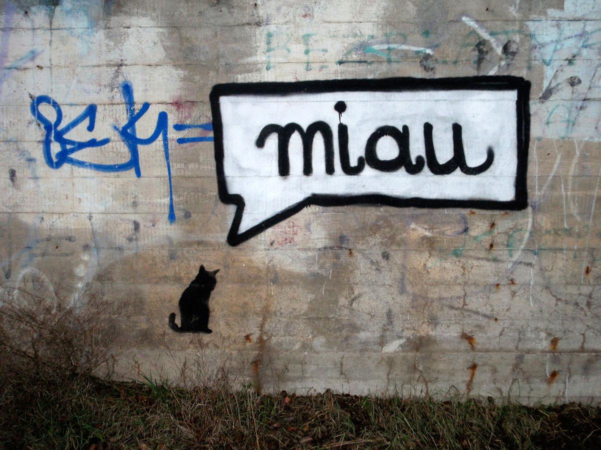 miau-miau-dolne-mlyny-matemblewo-2014