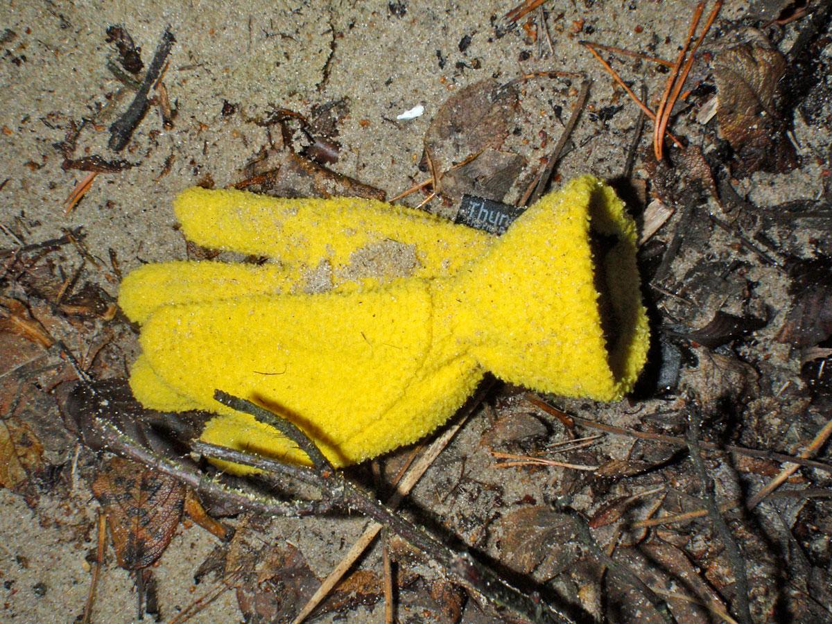 yellow-glove-sand-2015-02